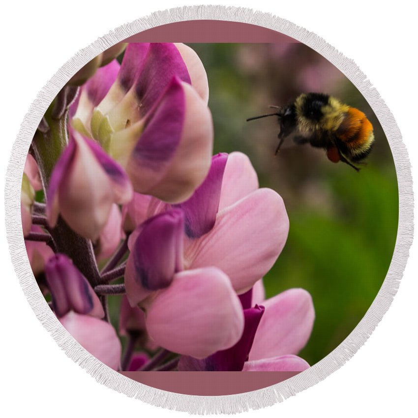 Bee Round Beach Towel featuring the photograph Bee In Flight by Yvette Schneider-Little