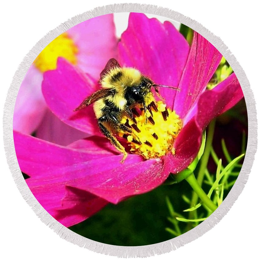 Bee Round Beach Towel featuring the photograph Bee-line 3 by Will Borden