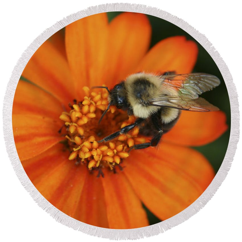 Bee Round Beach Towel featuring the photograph Bee On Aster by Margie Wildblood