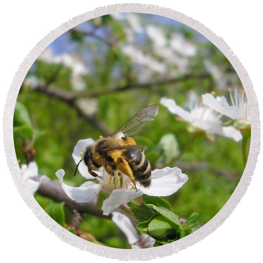 Apple Round Beach Towel featuring the photograph Bee On Flower On Tree Branch by Miroslav Nemecek