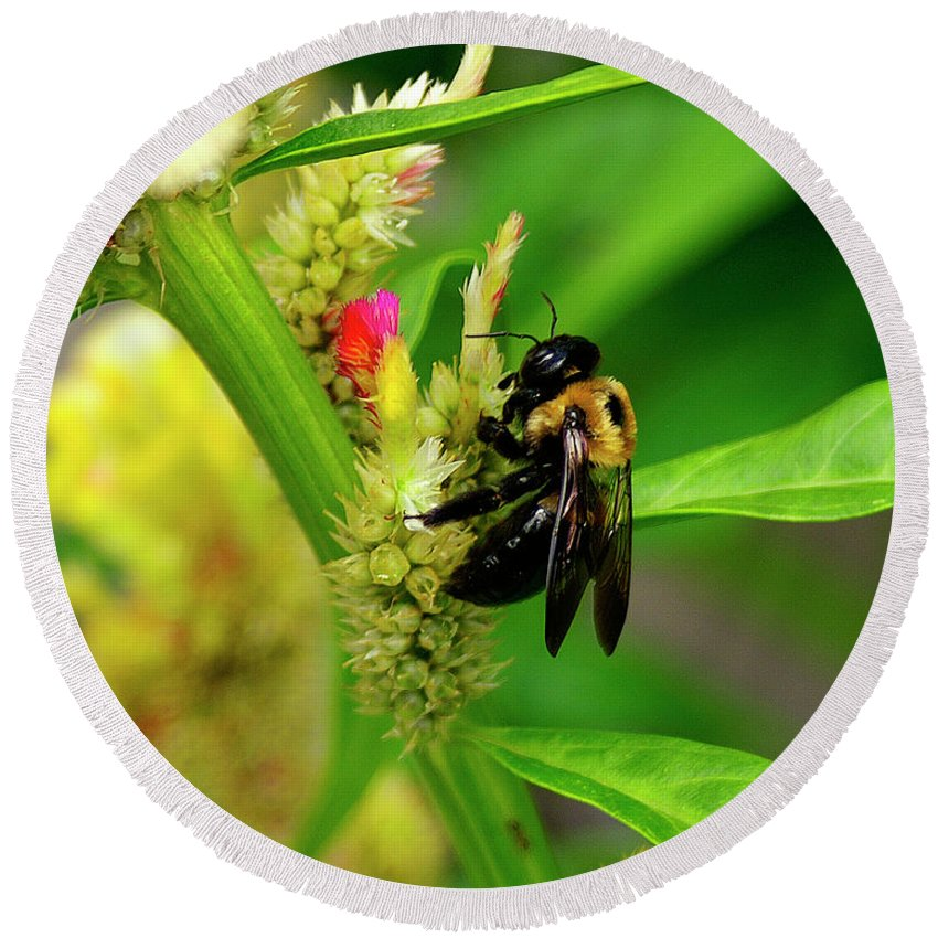 Nature Round Beach Towel featuring the photograph Bee On Flower by Susan Cliett