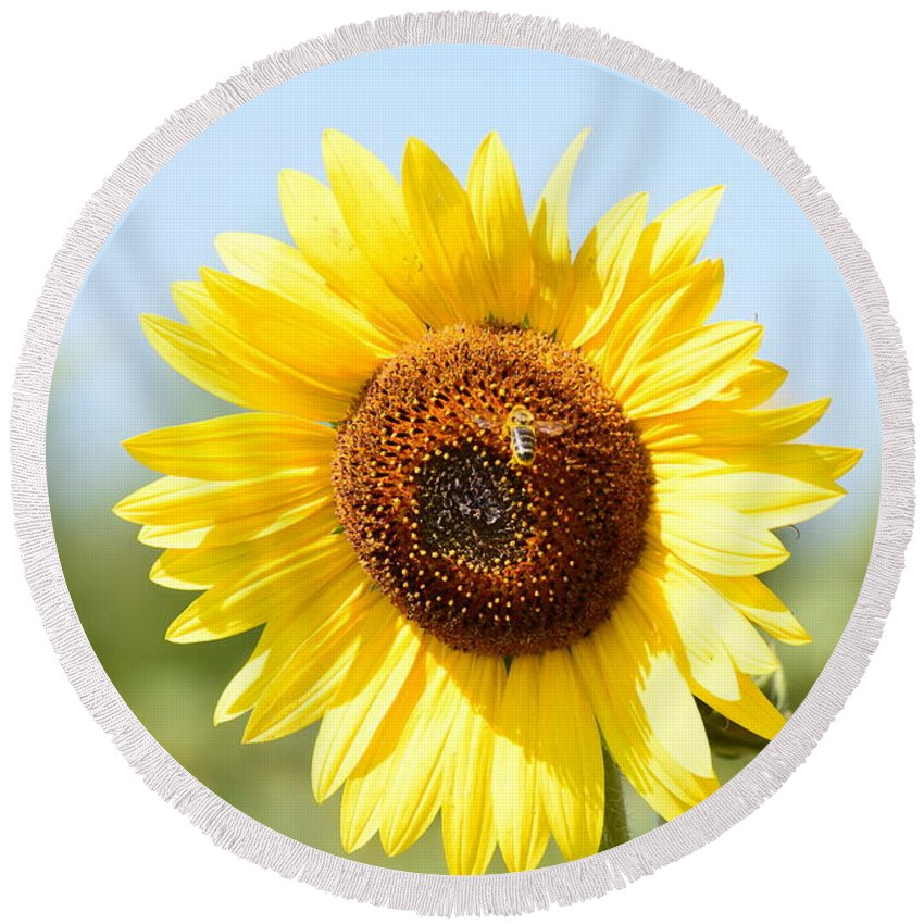 Sunflower Round Beach Towel featuring the photograph Bee On Yellow Sunflower by Miomir Magdevski