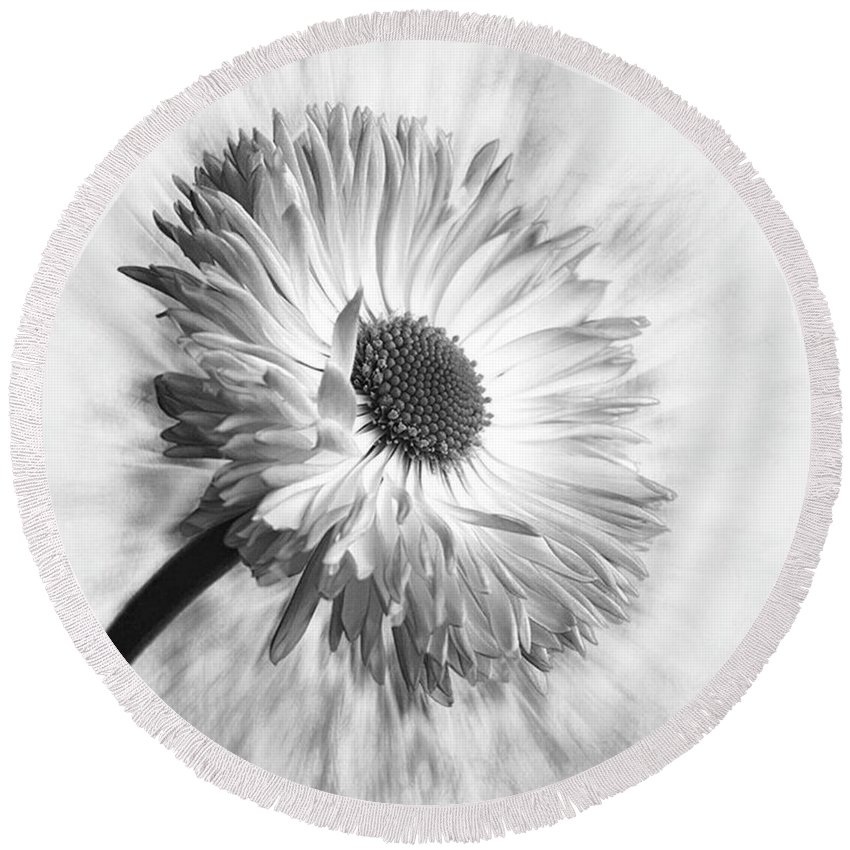 Beautiful Round Beach Towel featuring the photograph Bellis In Mono  #flower #flowers by John Edwards