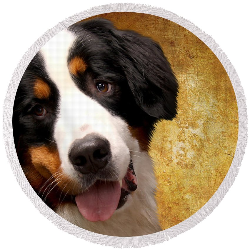 Bernese Mountain Dog Beach Products