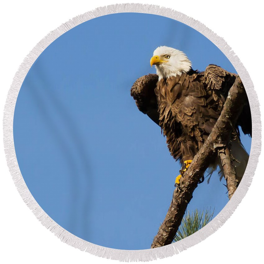 Blue Round Beach Towel featuring the photograph Berry Eagle by Geraldine DeBoer