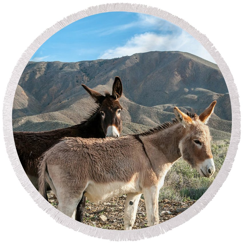 Wild Burros Round Beach Towel featuring the photograph Best Of Friends by Stephen Whalen