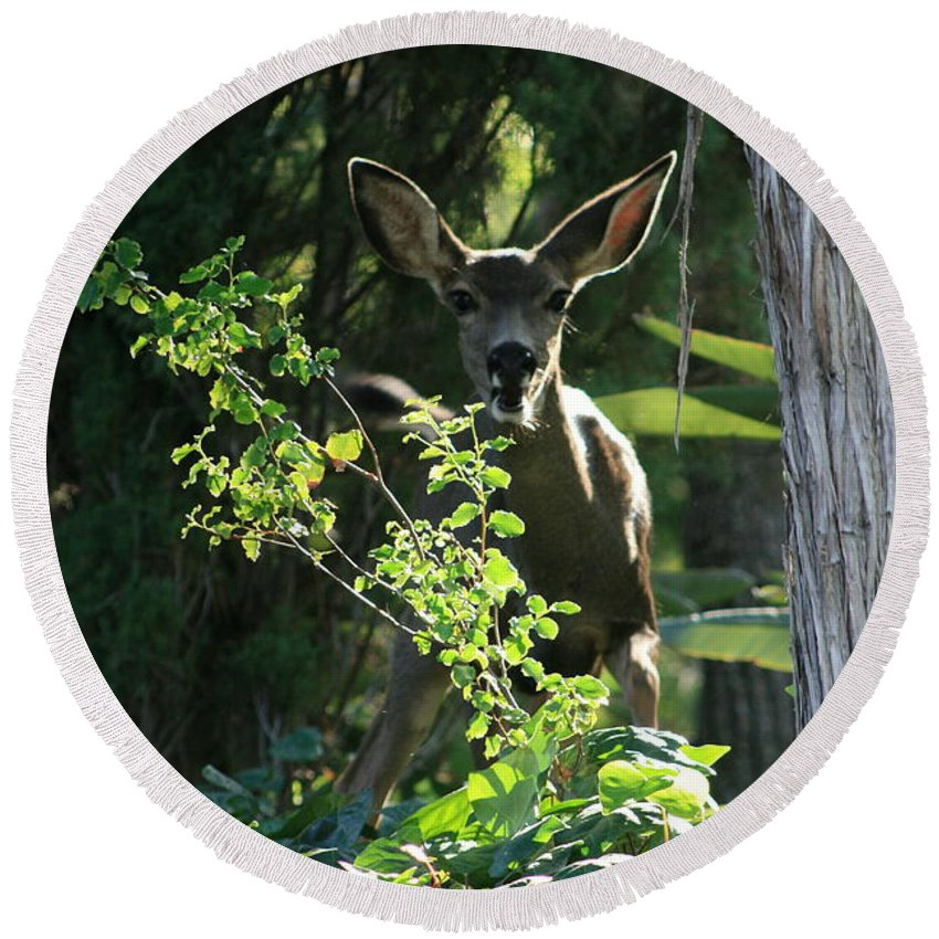 Beverly Hills Round Beach Towel featuring the photograph Beverly Hills Deer by Marna Edwards Flavell