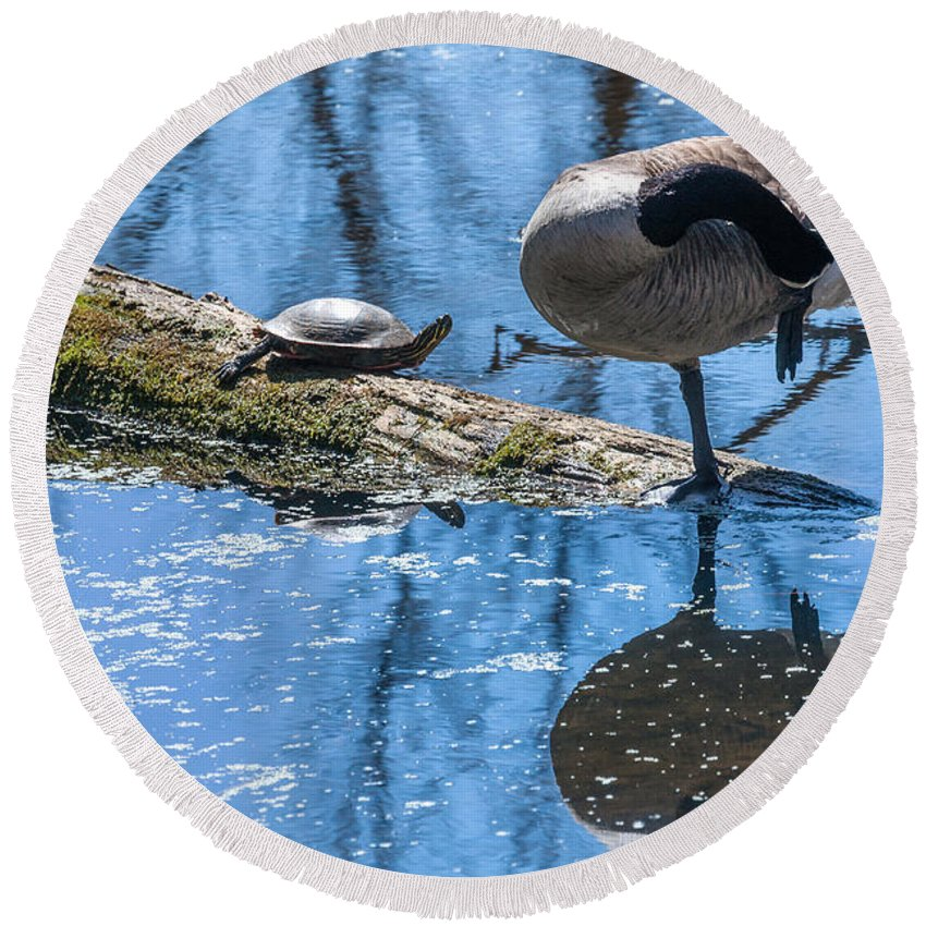 Heron Heaven Round Beach Towel featuring the photograph Bff Turtle And Canda Goose by Edward Peterson