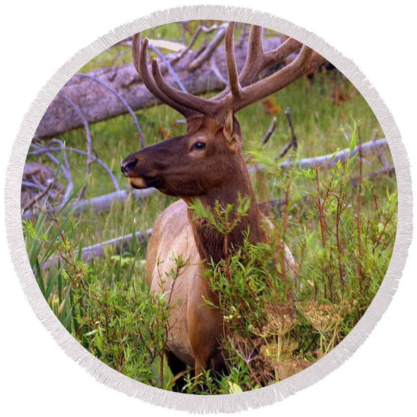 Bull Elk Round Beach Towel featuring the photograph Big Bull by Marty Koch