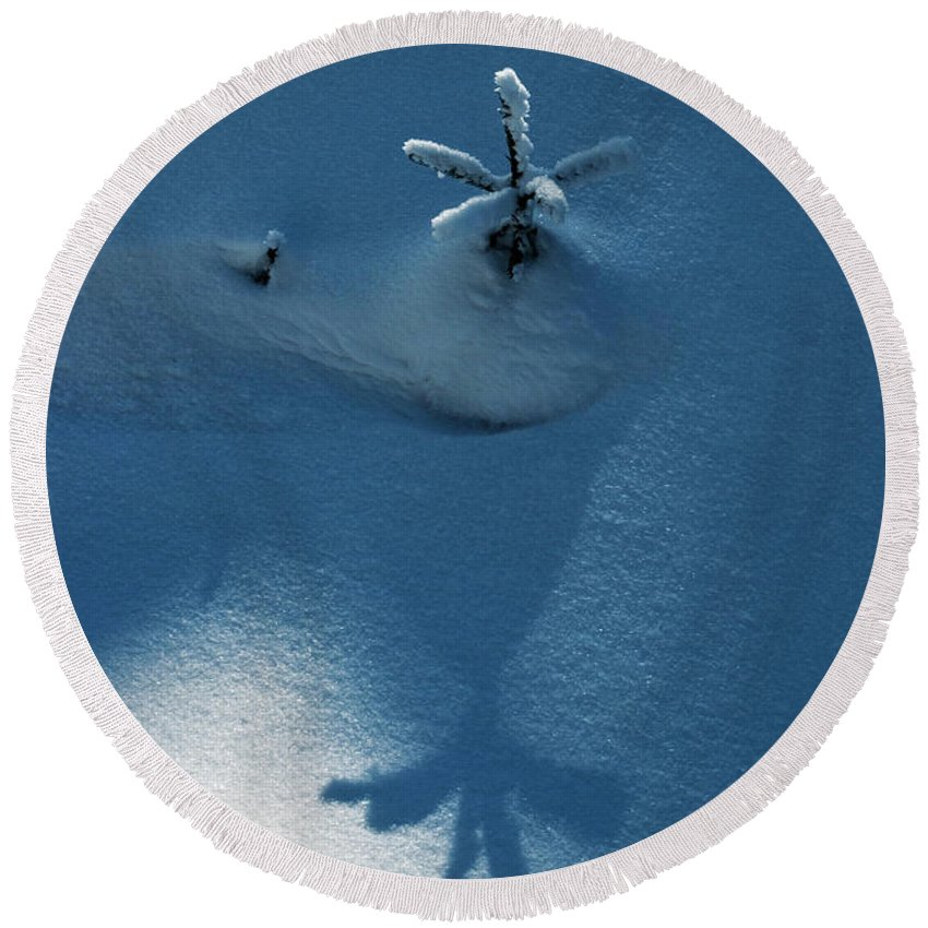Dark Round Beach Towel featuring the photograph Big Shadow Of A Small Tree On The Snow by Jozef Jankola
