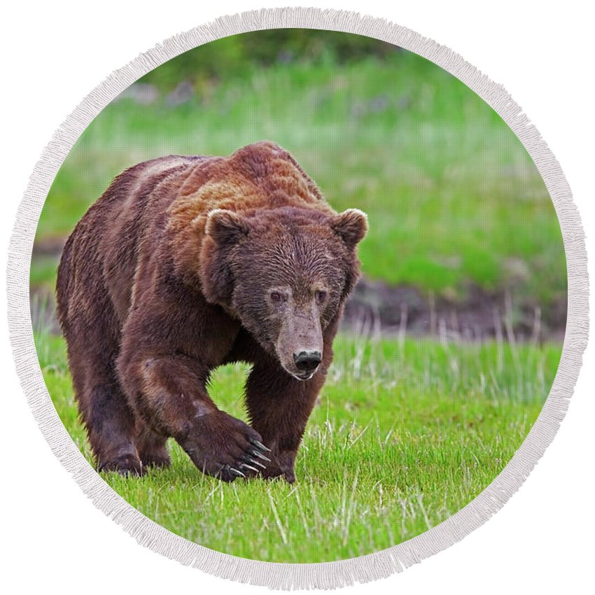 Adult Round Beach Towel featuring the photograph Big Ugly Grizzly Boar Claws by David Burke
