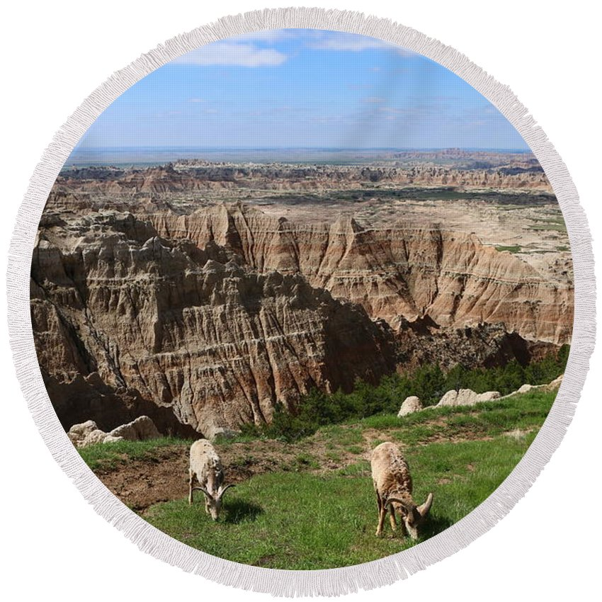 Round Beach Towel featuring the photograph Bighorn Sheeps At Sage Creek by Christiane Schulze Art And Photography