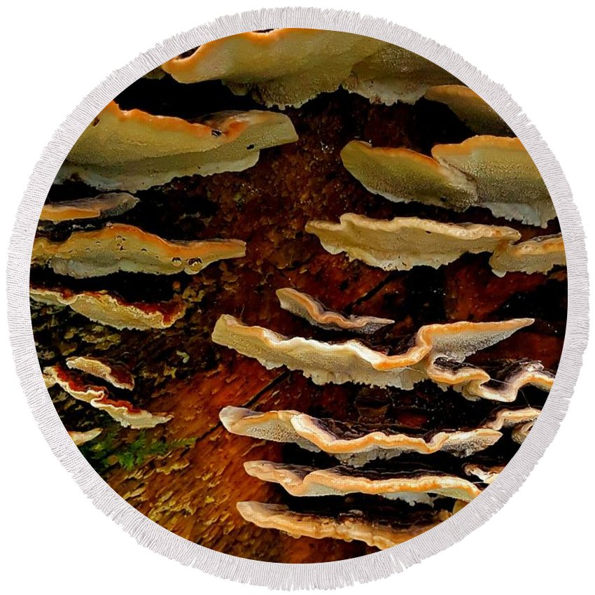 Fungus Round Beach Towel featuring the photograph Birch Bracket Fungus by Colin Drysdale