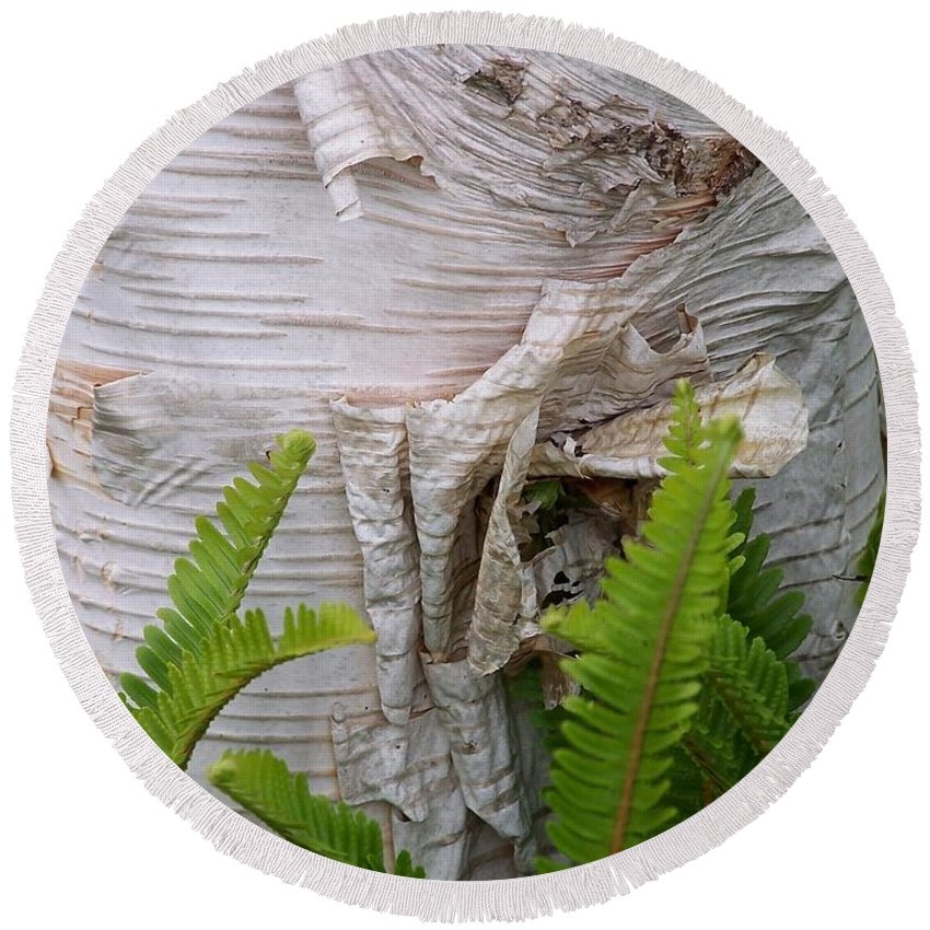 Tree Round Beach Towel featuring the photograph Birch Fern by Gale Cochran-Smith