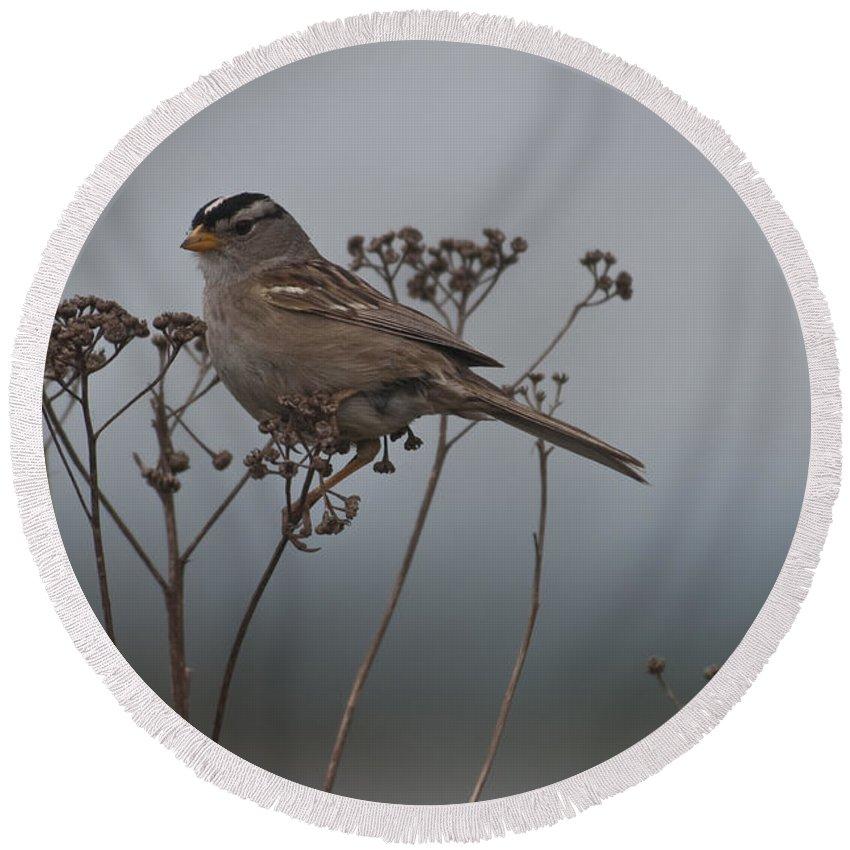 Bird Round Beach Towel featuring the photograph Bird Alert by Rod Wiens