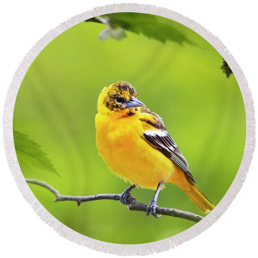 Bird Round Beach Towel featuring the photograph Bird And Blooms - Baltimore Oriole by Christina Rollo
