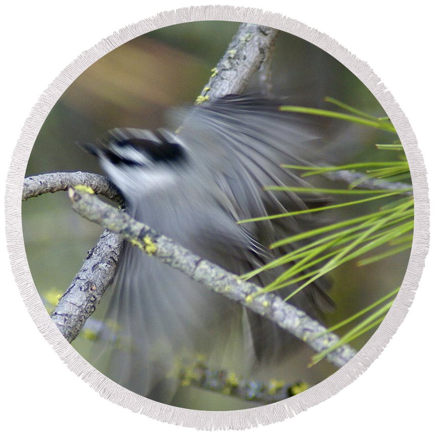 Birds Round Beach Towel featuring the photograph Bird In Action by Ben Upham III