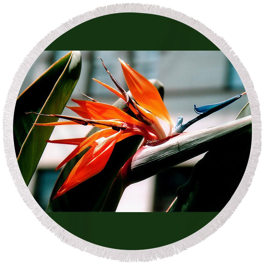 Flowers Round Beach Towel featuring the photograph Bird Of Paradise 2 by Susanne Van Hulst