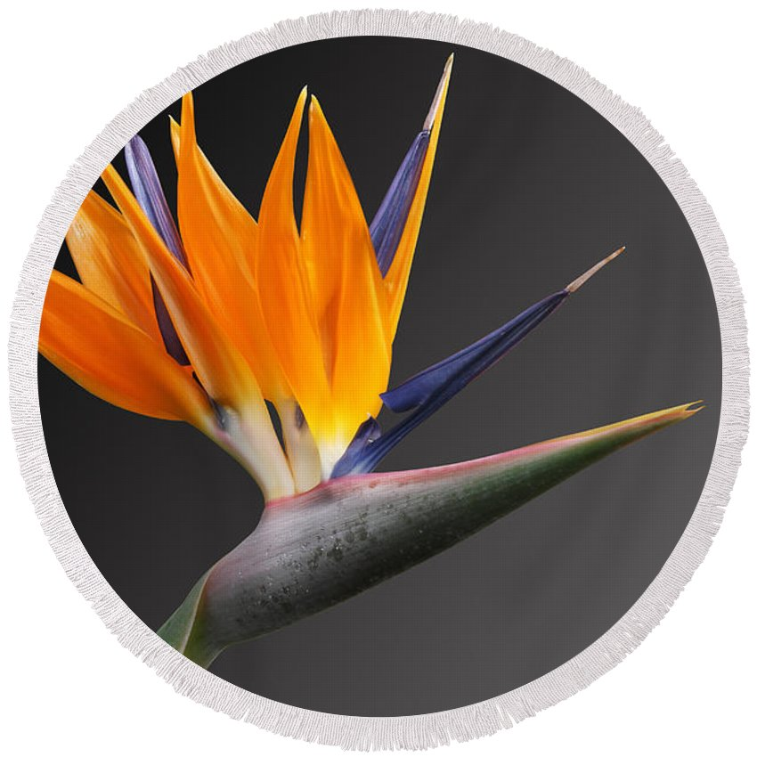 Bird Of Paradise Flower Round Beach Towel featuring the photograph Bird Of Paradise #3 by Judy Whitton
