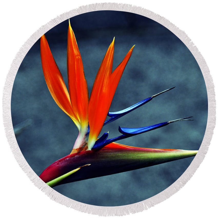 Clay Round Beach Towel featuring the photograph Bird Of Paradise by Clayton Bruster