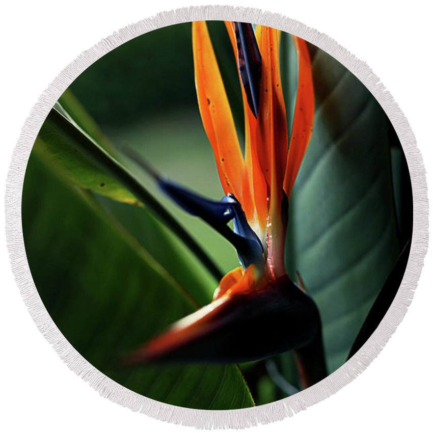 Bird Of Paradise Round Beach Towel featuring the photograph Bird Of Paradise by Heather Strong