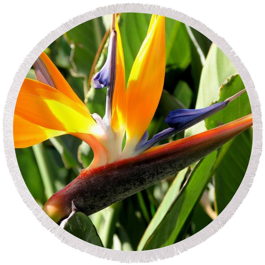 Bird Of Paradise Round Beach Towel featuring the photograph Bird Of Paradise by Mary Deal