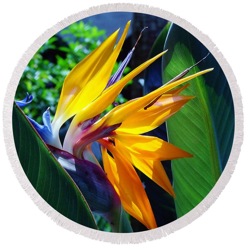 Flowers Round Beach Towel featuring the photograph Bird Of Paradise by Susanne Van Hulst
