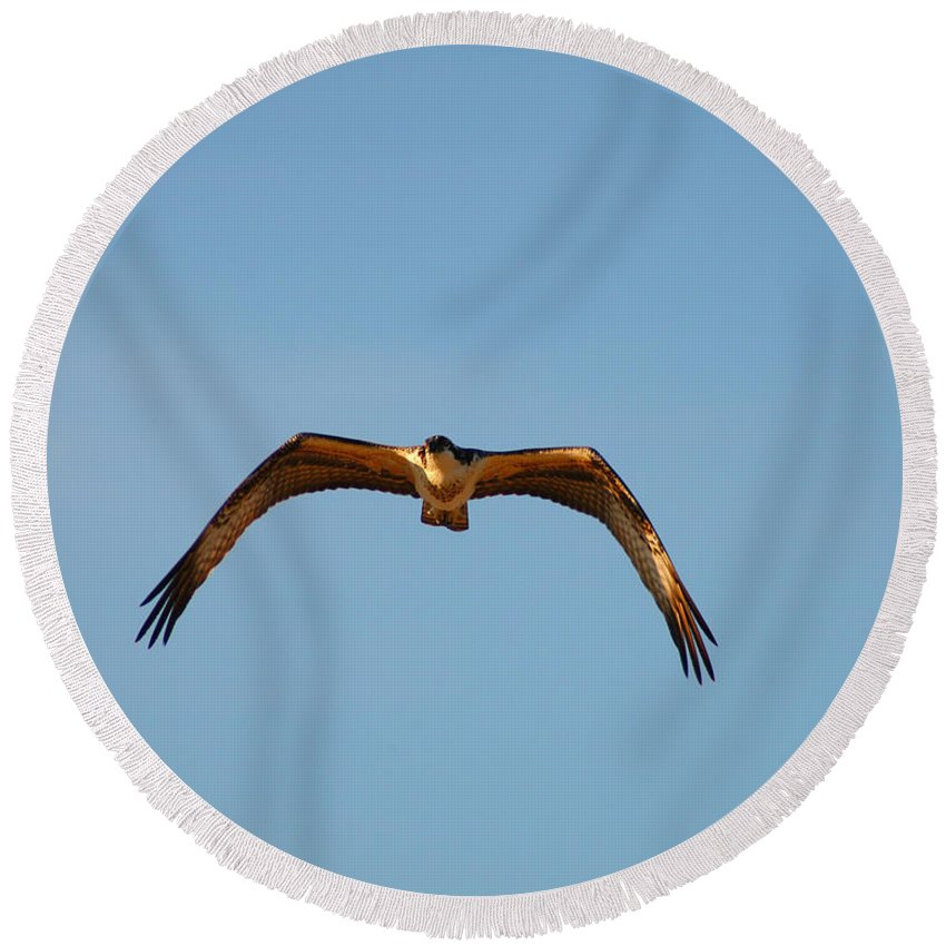 Clay Round Beach Towel featuring the photograph Bird Of Prey by Clayton Bruster