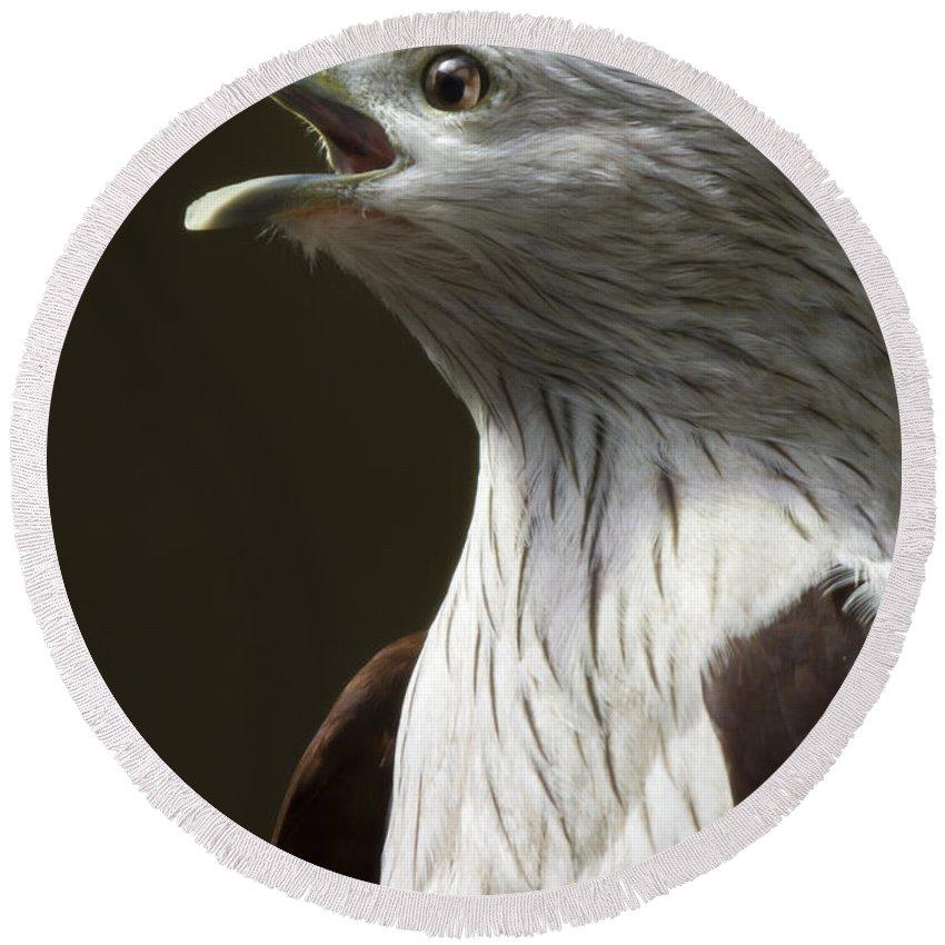 Bird Of Prey Round Beach Towel featuring the photograph Bird Portrait by Angel Ciesniarska
