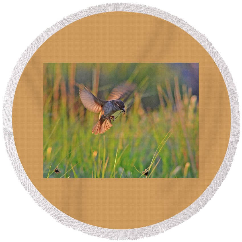Bird Round Beach Towel featuring the photograph Bird With Prey by Nicola Fusco