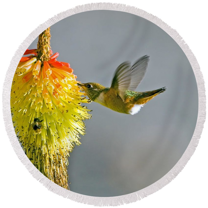 Hummingbird Round Beach Towel featuring the photograph Birds And Bees by Mike Dawson