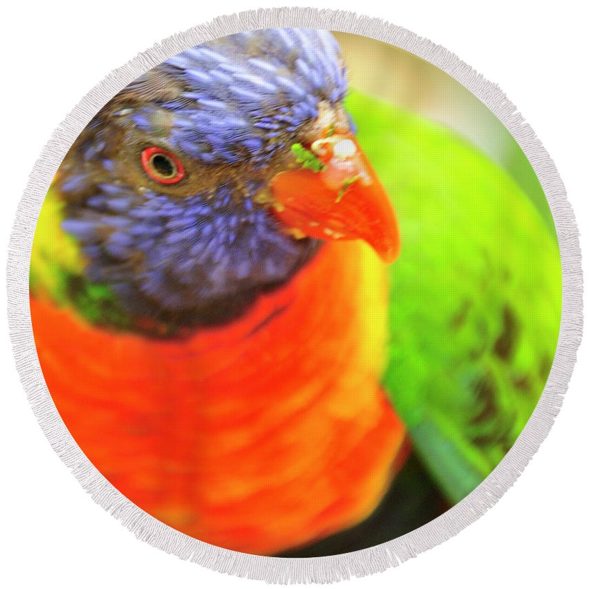 Parrot Round Beach Towel featuring the photograph Birds Eye Viewed by David Arment