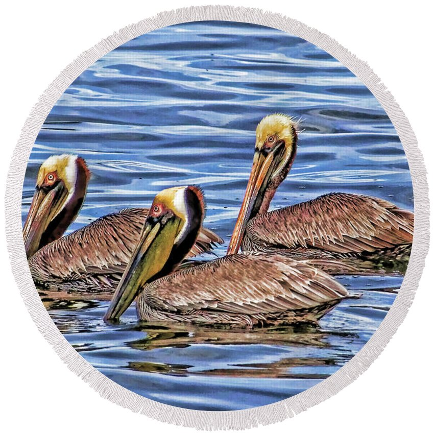 Brown Pelican Round Beach Towel featuring the photograph Birds Of A Feather by HH Photography of Florida