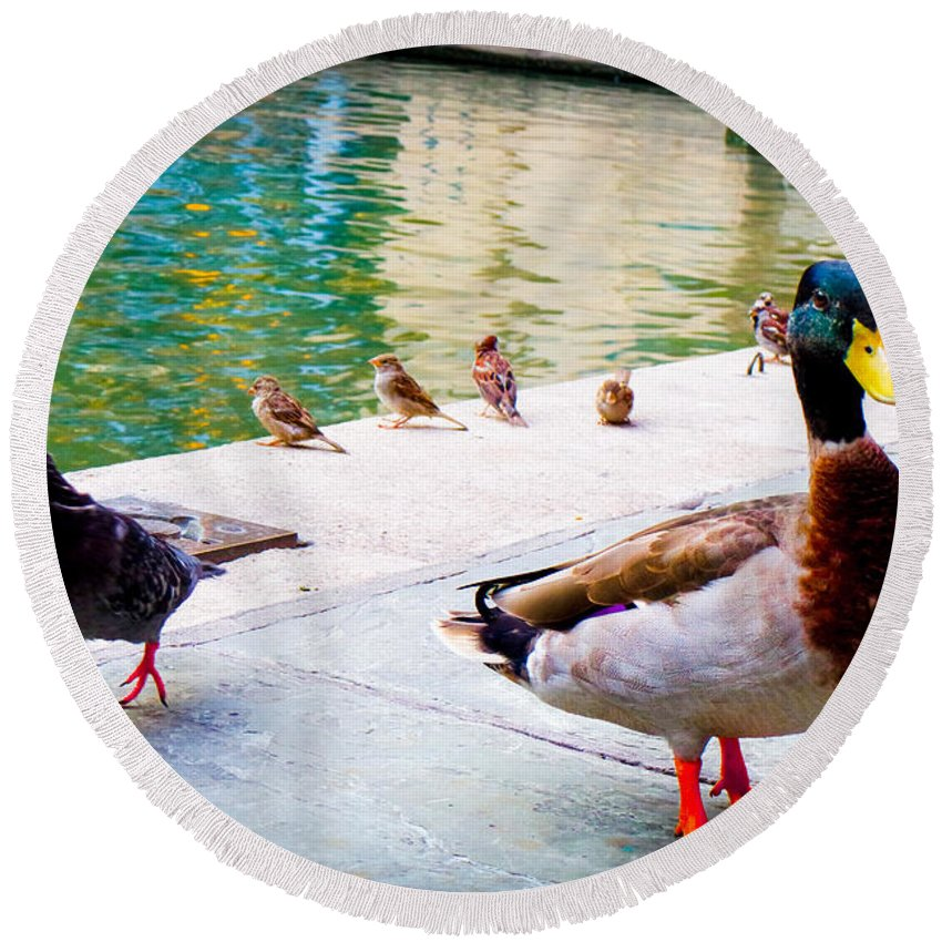 San Antonio Round Beach Towel featuring the photograph Birds Of The River by Marisela Mungia