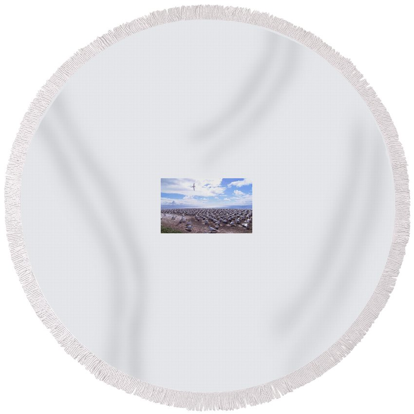 Round Beach Towel featuring the photograph Birds by Raymond Dunkwu