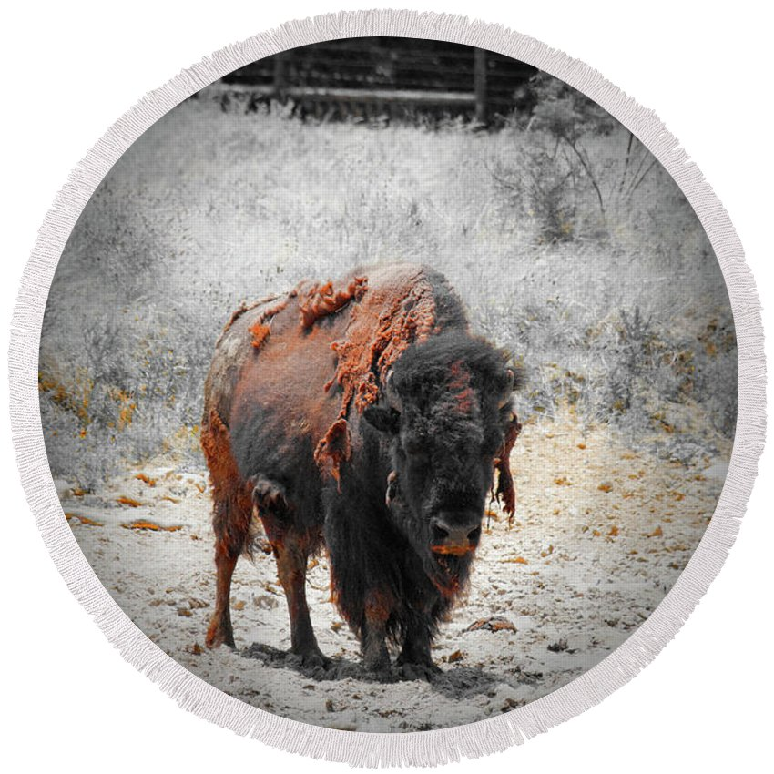 Buffalo Round Beach Towel featuring the photograph Bison by Douglas Barnard