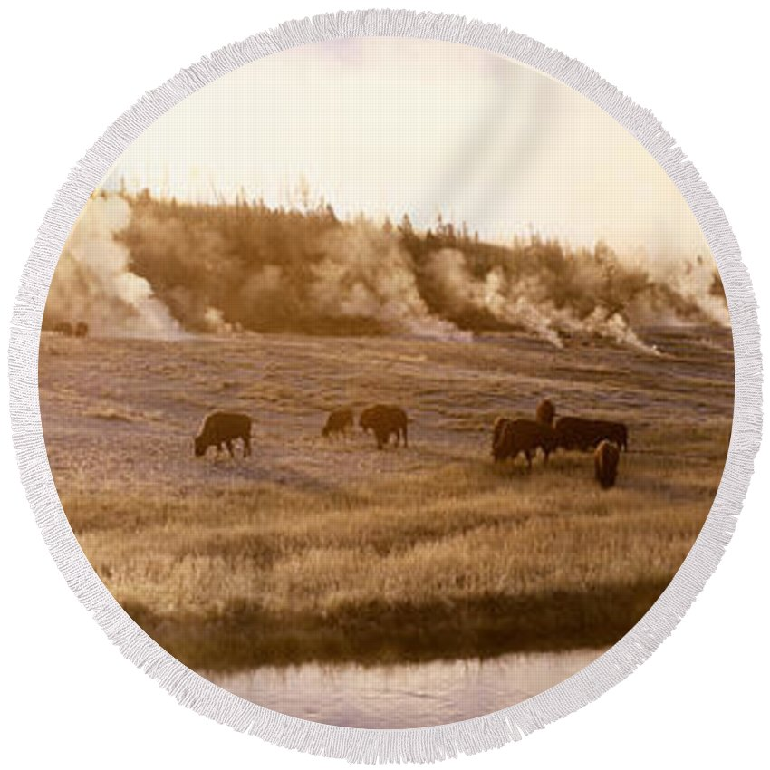 Photography Round Beach Towel featuring the photograph Bison Firehole River Yellowstone by Panoramic Images