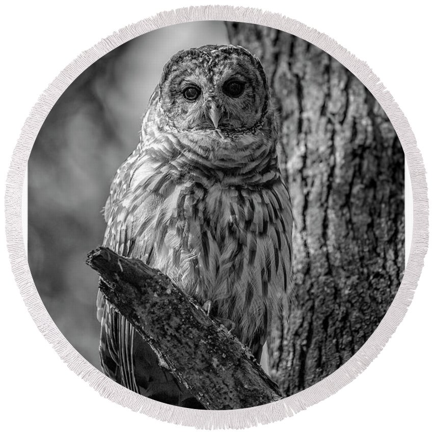 Owl Round Beach Towel featuring the photograph Black And White Barred Owl by Joe Gliozzo