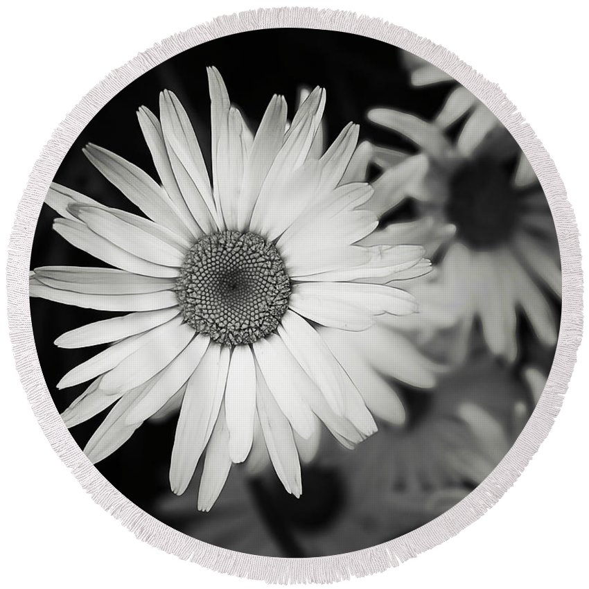 Flower Round Beach Towel featuring the photograph Black And White Daisy 1 by Alisha Jurgens