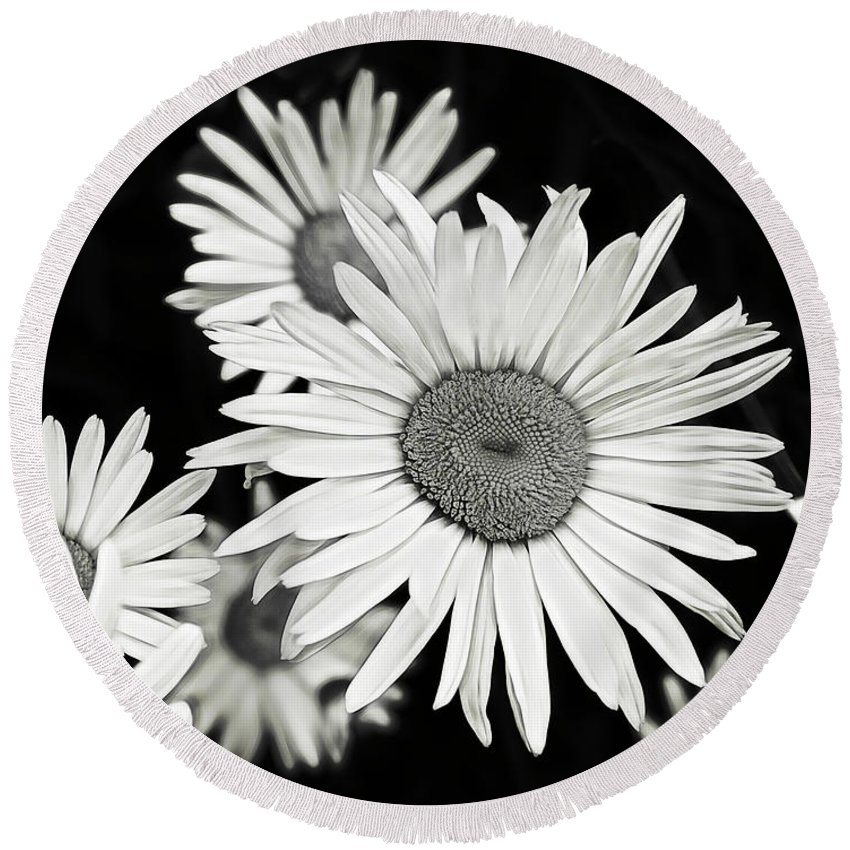 Flower Round Beach Towel featuring the photograph Black And White Daisy 3 by Alisha Jurgens