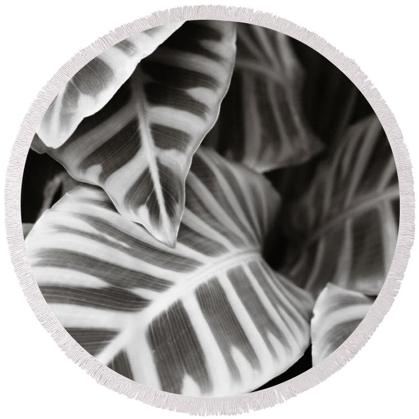 Black Round Beach Towel featuring the photograph Black And White Leaves by Marilyn Hunt