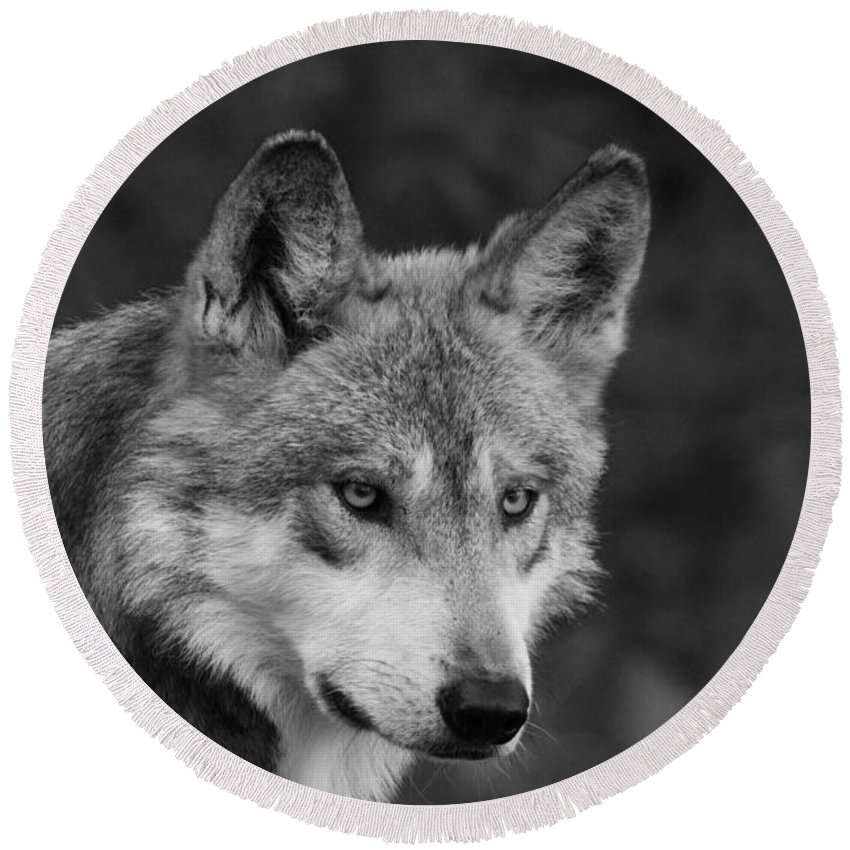Wolf Round Beach Towel featuring the photograph Black And White Mexican Wolf #4 by Judy Whitton