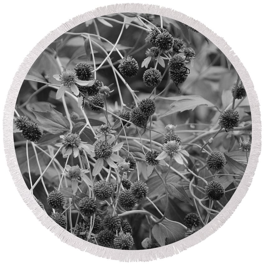 Black And White Round Beach Towel featuring the photograph Black And White Sun Flowers by Rob Hans