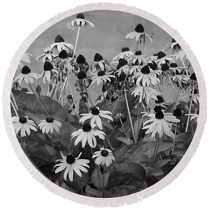 Round Beach Towel featuring the photograph Black And White Susans by Luciana Seymour