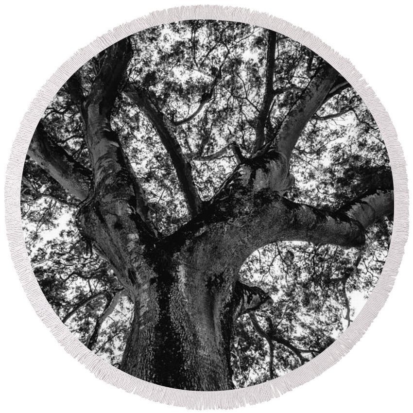 Black And White Round Beach Towel featuring the photograph Black And White Tree 4 by Totto Ponce