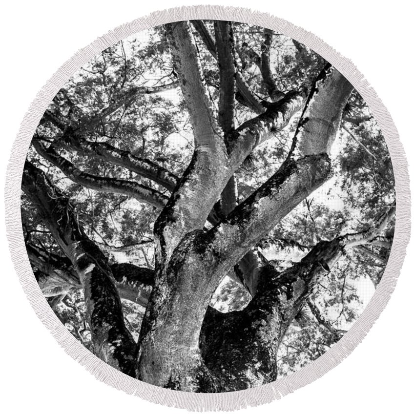 Black And White Round Beach Towel featuring the photograph Black And White Tree by Totto Ponce