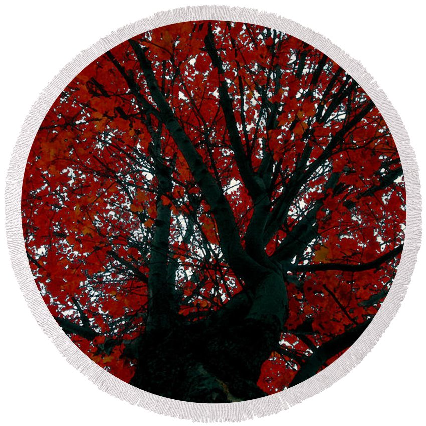 Red Tree Round Beach Towel featuring the painting Black Bark Red Tree by David Lee Thompson