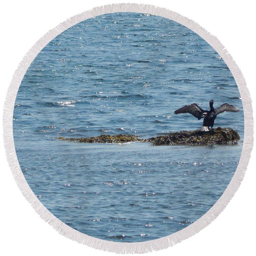 Black Round Beach Towel featuring the photograph Black Bird by Lisa Cassinari