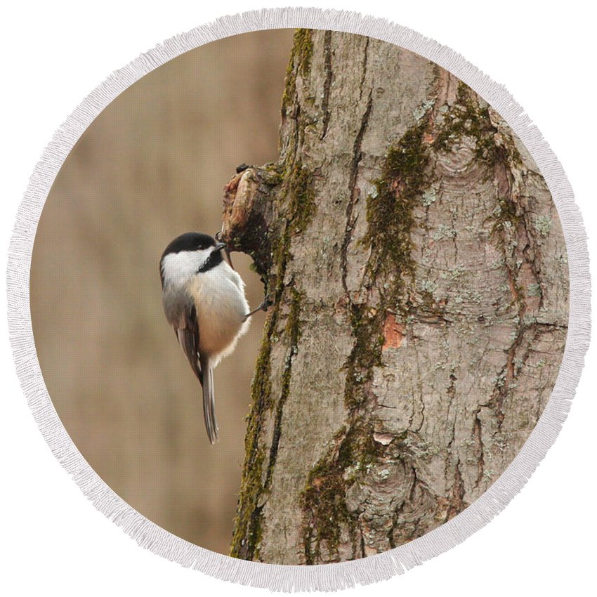 Bird Round Beach Towel featuring the photograph Black-capped Chickadee by Charles Owens