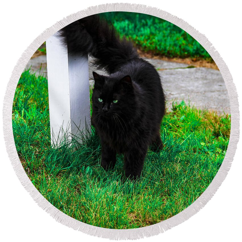 Cat Round Beach Towel featuring the photograph Black Cat Maine by Marina McLain